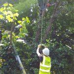 Tree Surgery 5