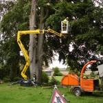 Tree Surgery 9
