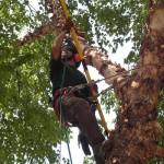 Tree Surgery 7